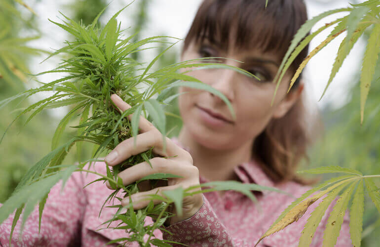 Woman With Hemp Plant