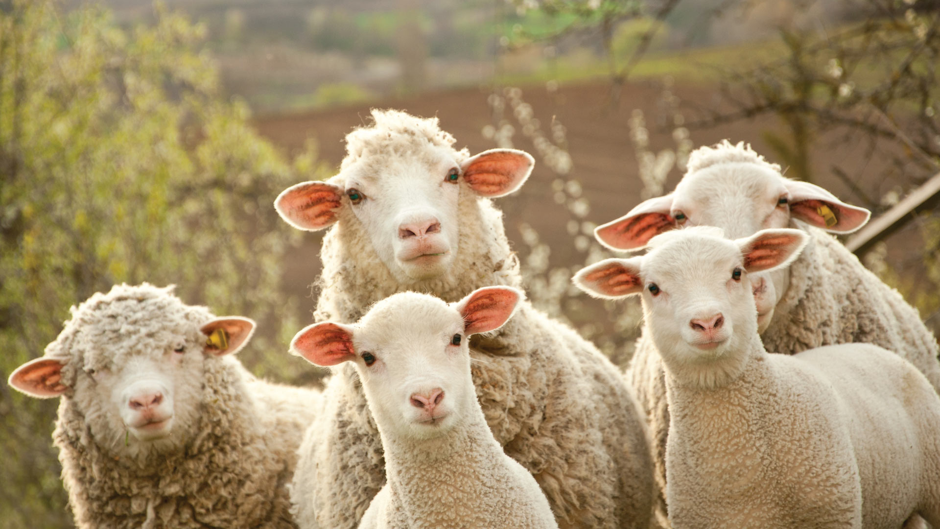 Stop Counting Sheep. 8 Strains that Promote Sleep