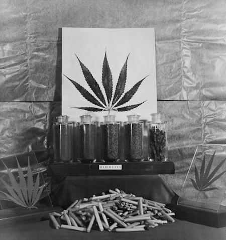 1940's marijuana display