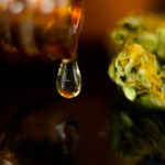 hemp oil drop next to a cannabis nug