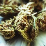 Moldy marijuana: When pot goes to rot