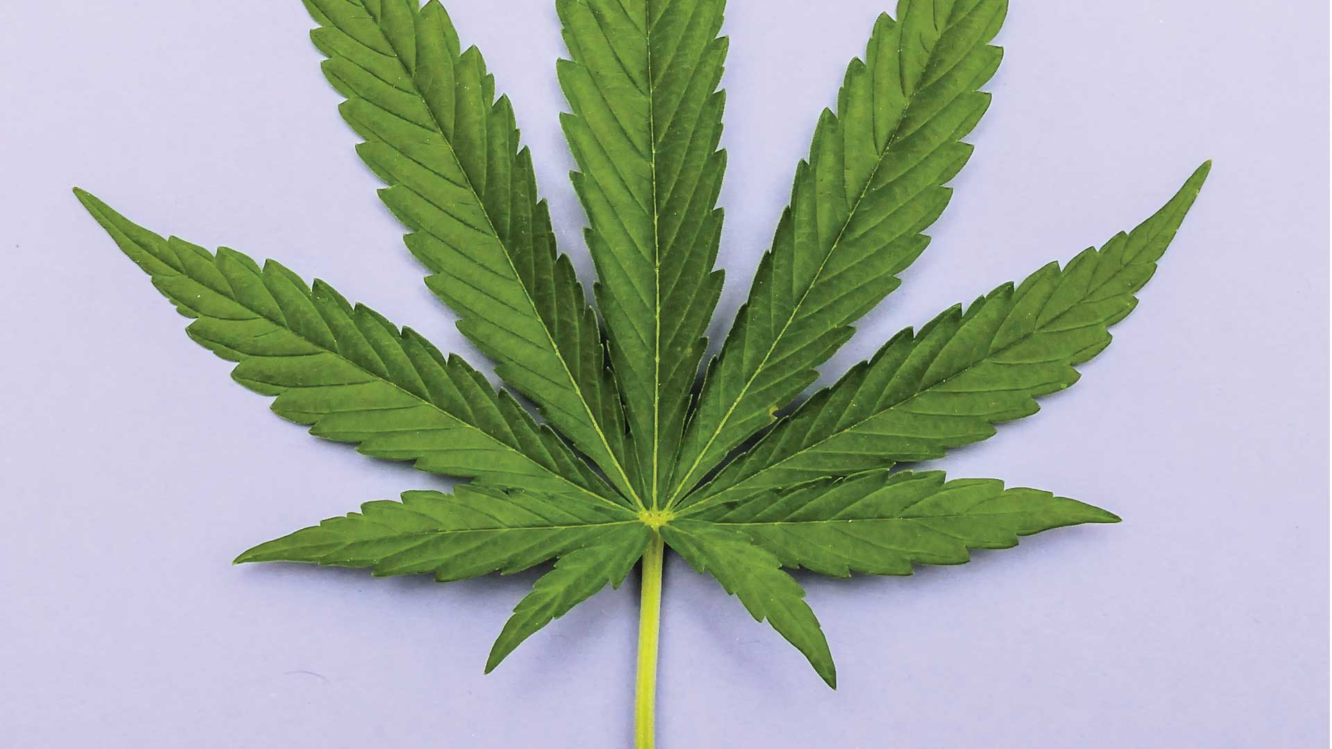 Cannabinoid Hyperemesis Syndrome: A Danger or Not?