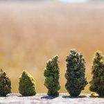 The ten largest cannabis companies in North America