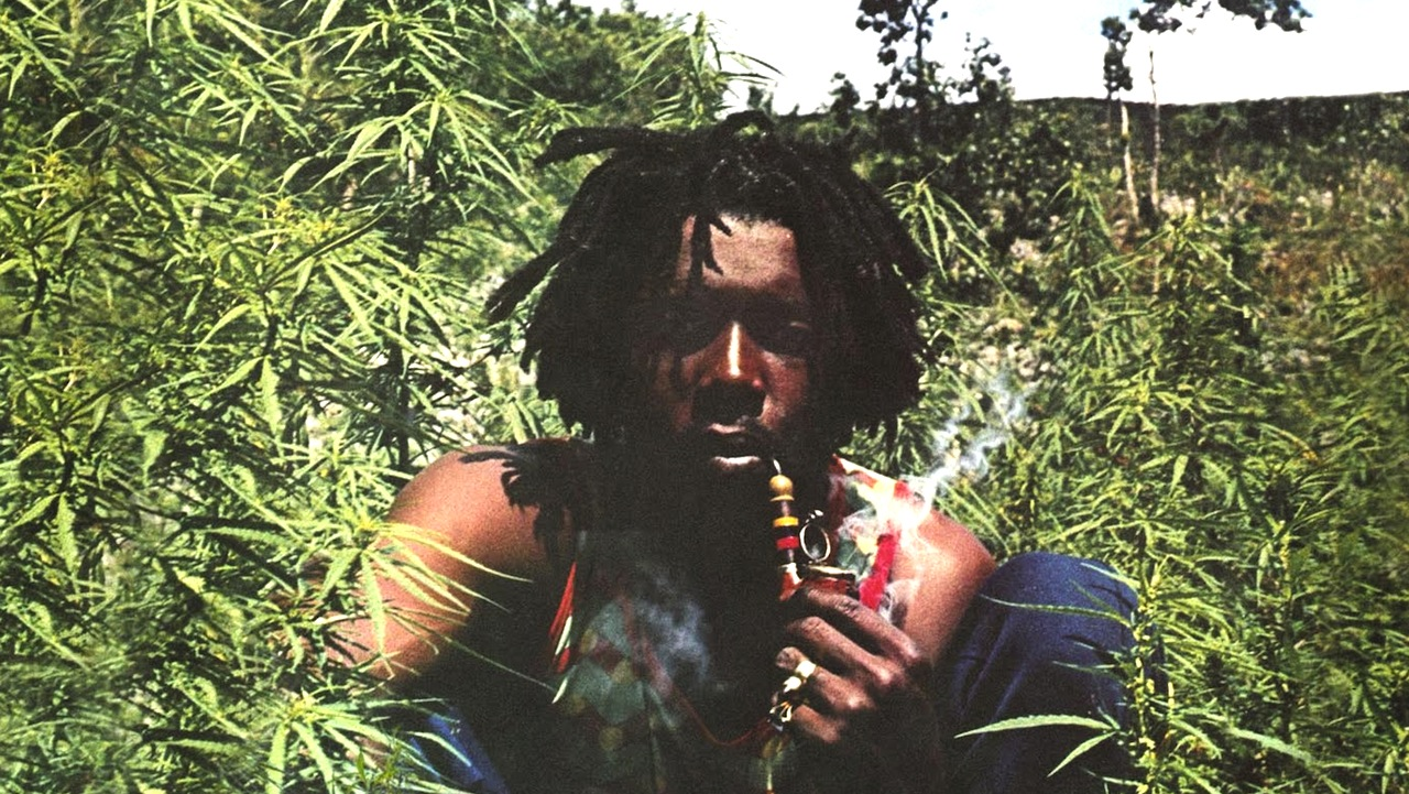 Peter Tosh in a cannabis field