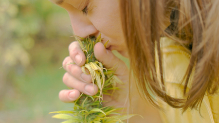 Terpenes are present in all kinds of plants and are responsible for their smell