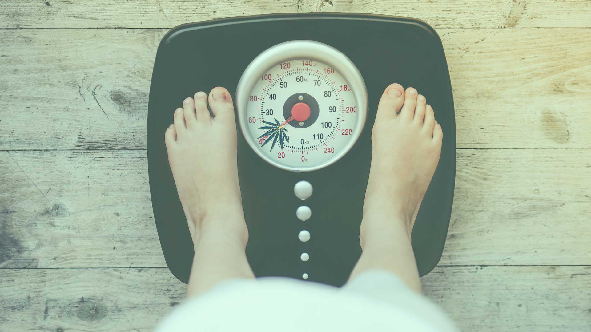 Cannabis and Weight Management: Does Weed Make You Lose Weight?