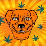 Can my pet get high from second hand smoke?