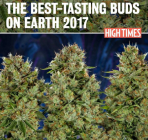 Best tasting buds - high times