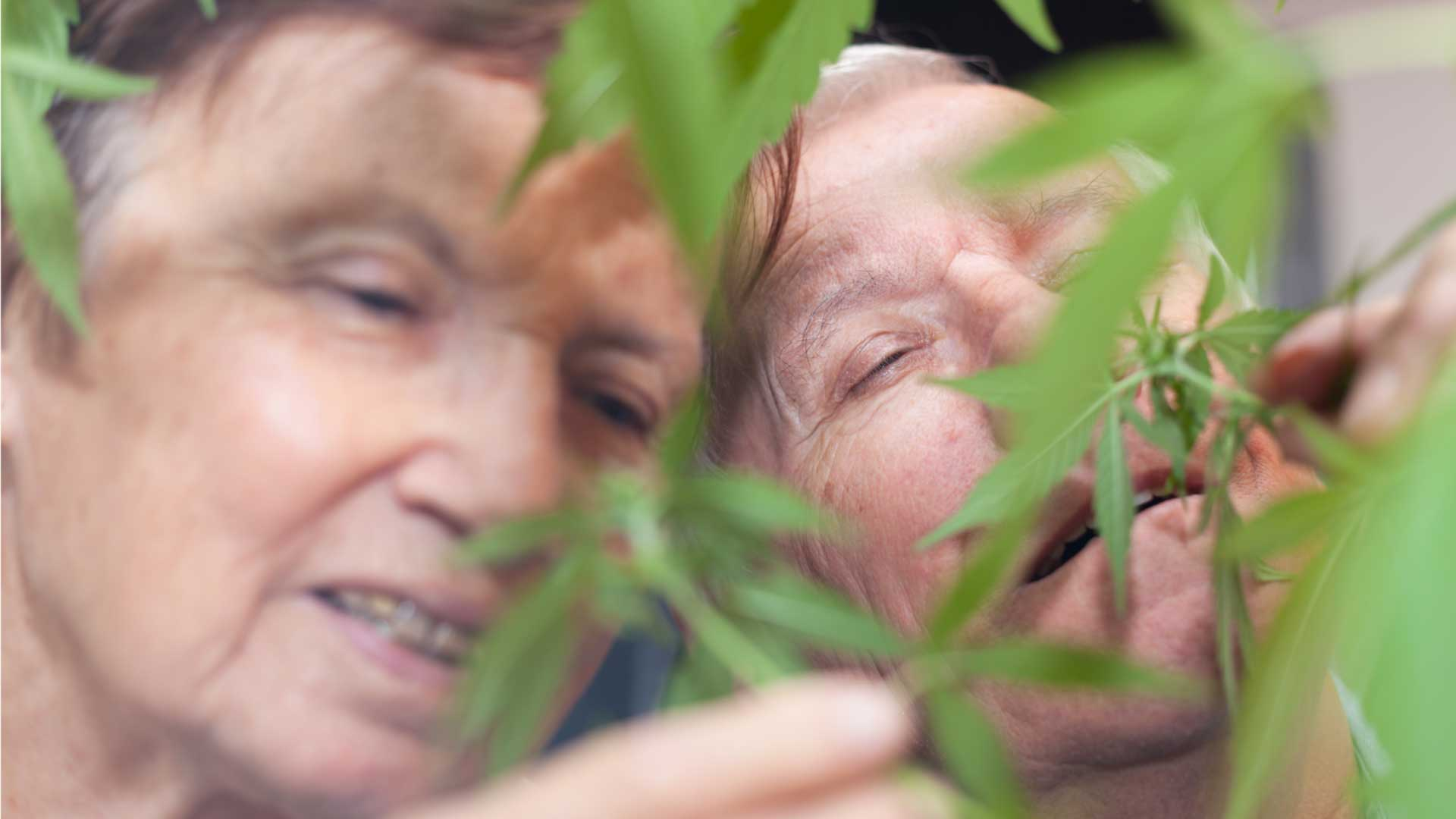 How to talk to your parents about cannabis