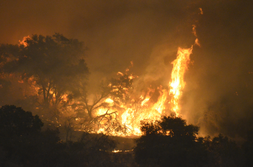 California Wildfires Affected Cannabis Farms