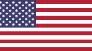 American flag with weed leaves instead of stars