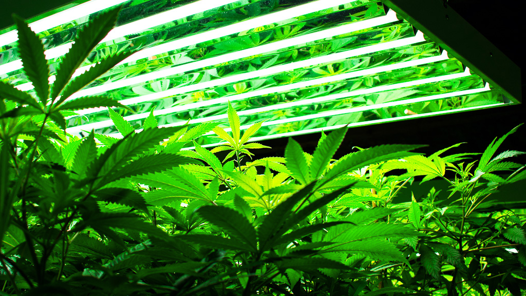 Grow Cannabis with CO2