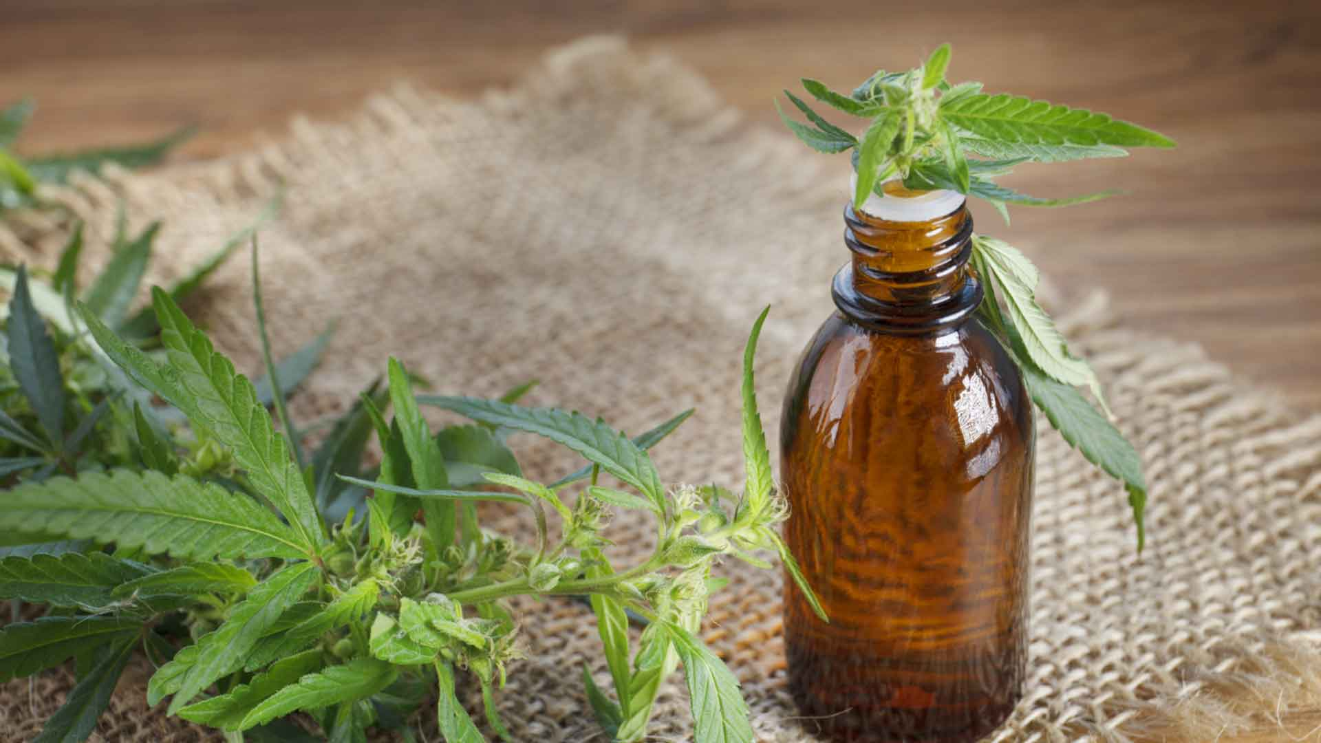 The Health Benefits of CBD Tincture and How To Make It - Wikileaf