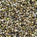What are hemp seeds?