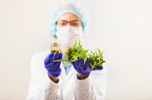 More cannabis research is needed