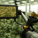 Camera taking pictures of cannabis