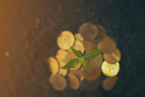 There are only 400 banks that insure cannabis companies