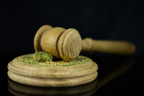 You can take cannabis law classes