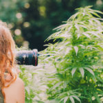 Follow these cannabis photographers