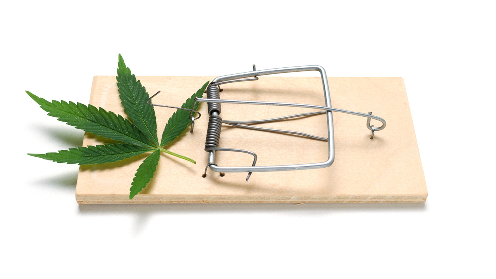 cannabis leaf in a mouse trap
