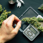 Taking cannabis measurements on a scale