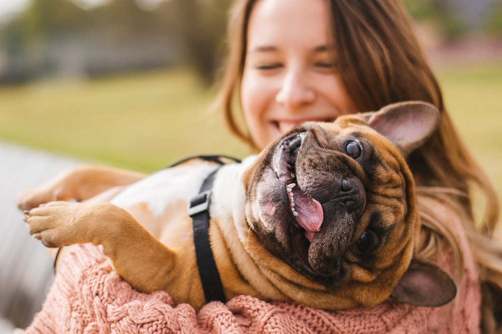 veterinarians ask for cannabis for pets