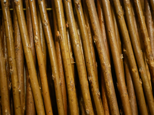 Bamboo for a trellis
