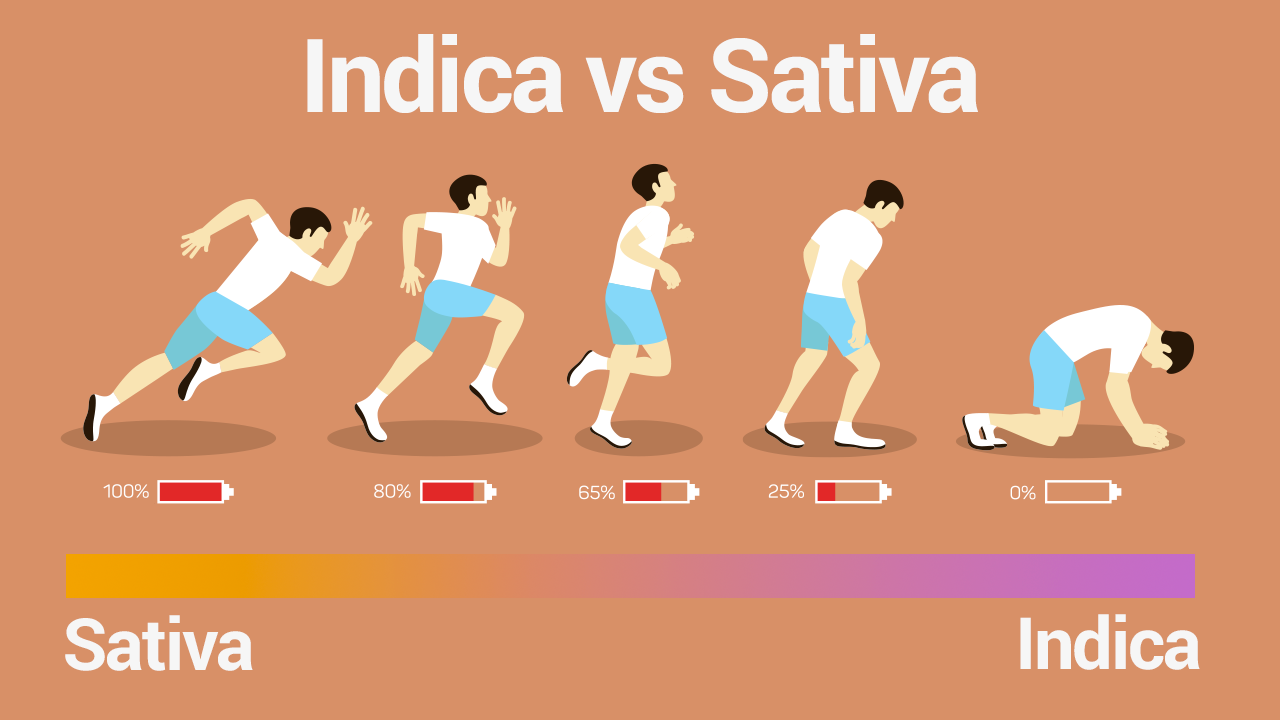 Diagram of a man running. Sativa he has energy, Indica he runs out of energy.