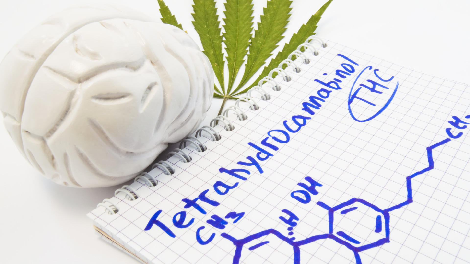 The brain and THC, Half-life of THC