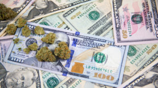 Marijuana bud on top of United States cash money