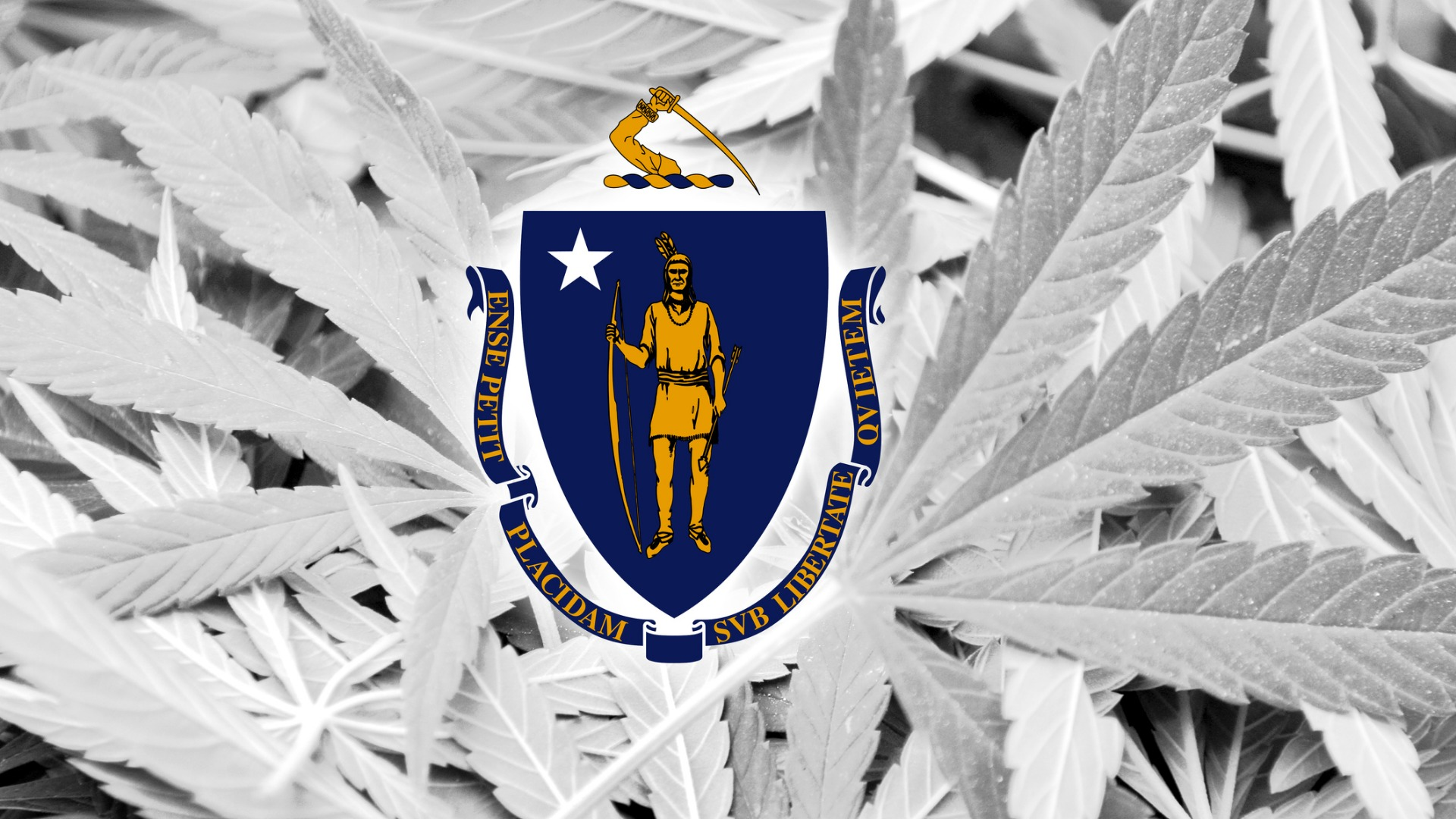 Massachusetts flag on a cannabis background