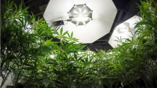 how to grow weed indoors, lights and space