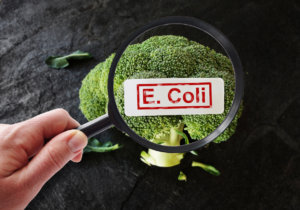 Magnifying glass examining broccoli with E Coli label