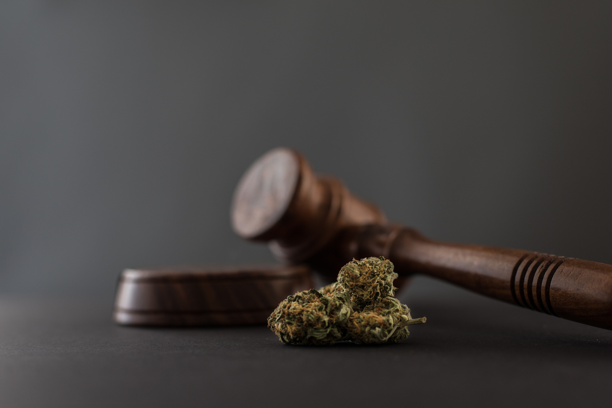 close up o cannabis and a gavel grey background