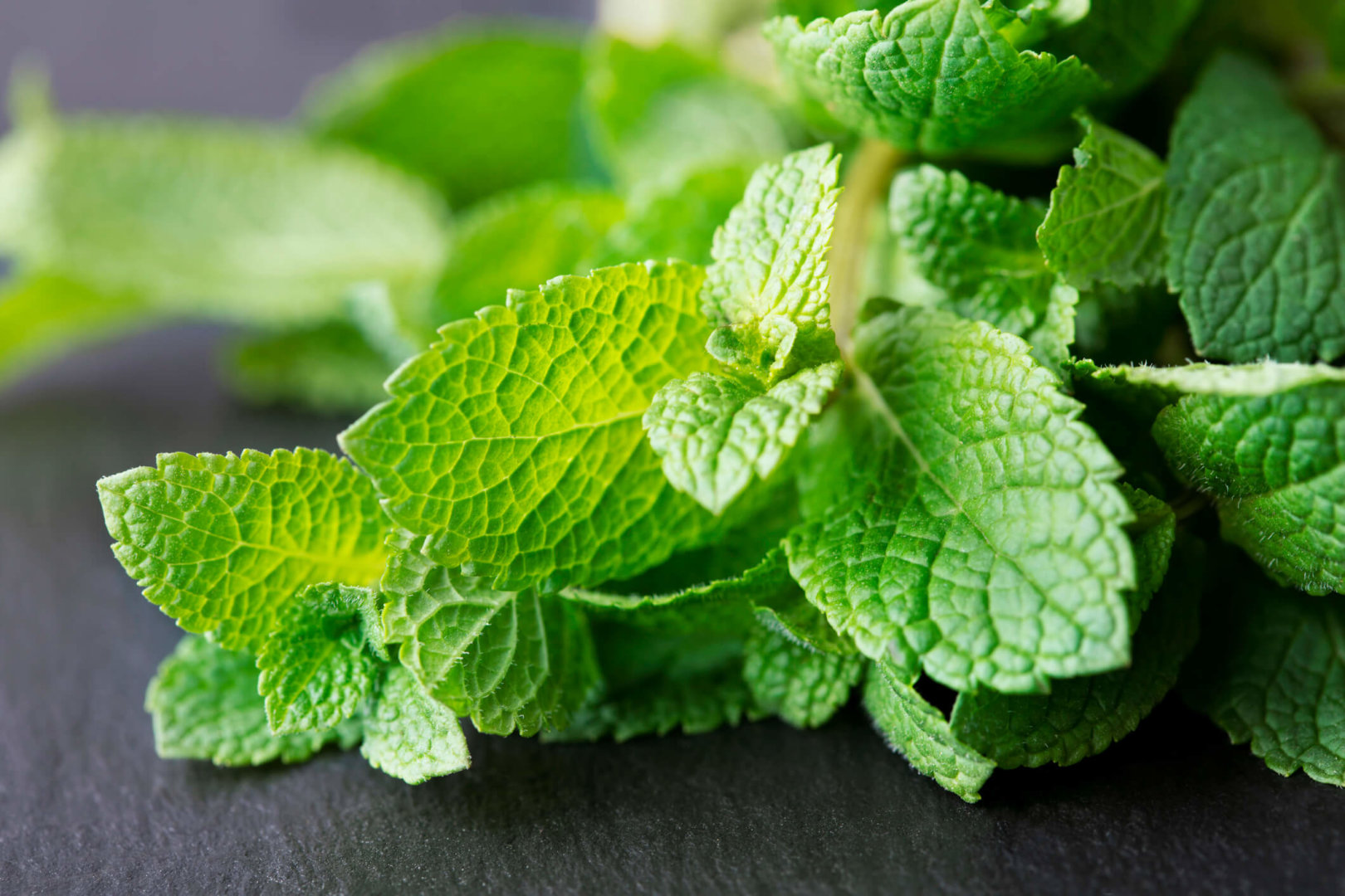 bunch of fresh mint leaves on dark slate background