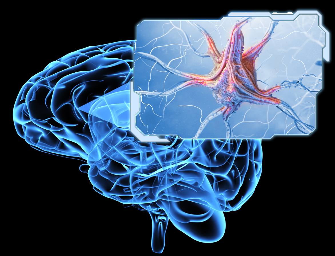 Neurons and nervous system, epilepsy