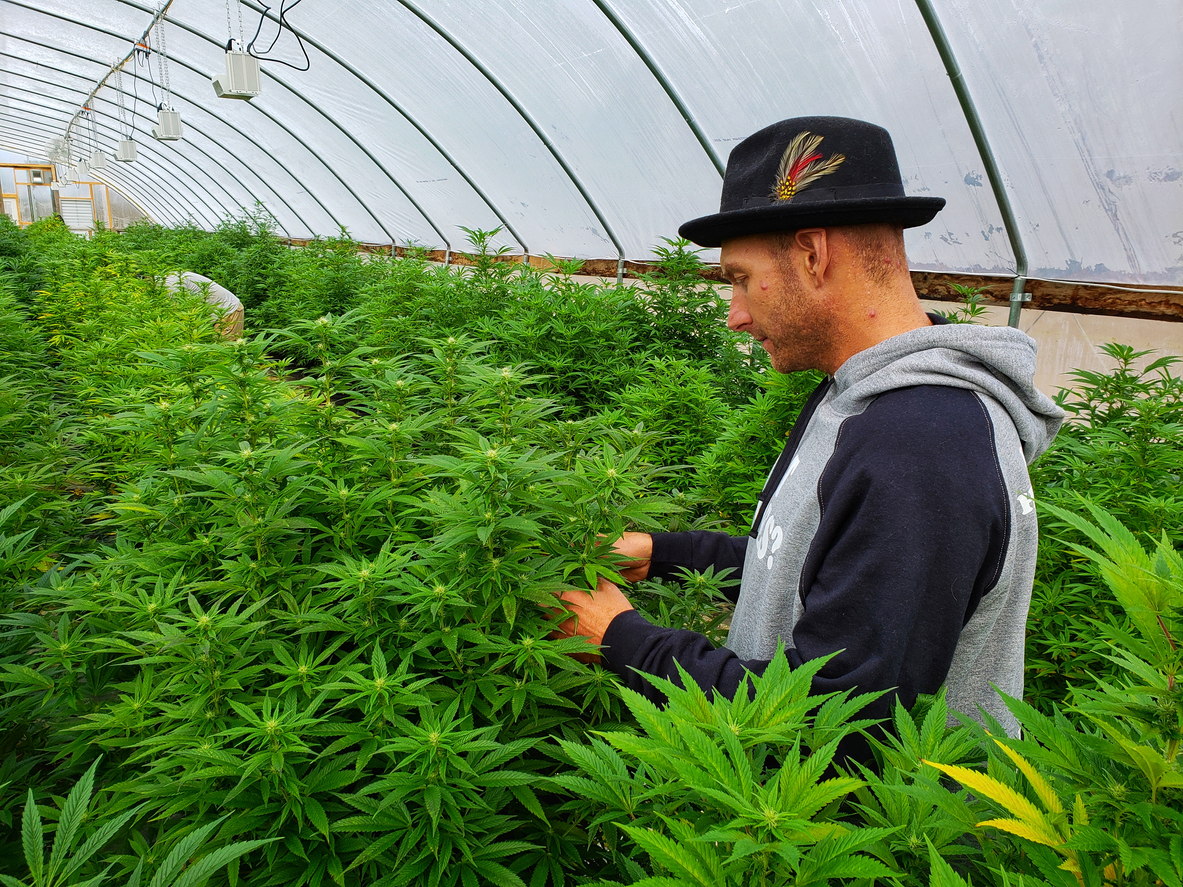 Farmers switch from produce to hemp as a major crop after legalization. CBD oil and other hemp based products generate higher farm income.