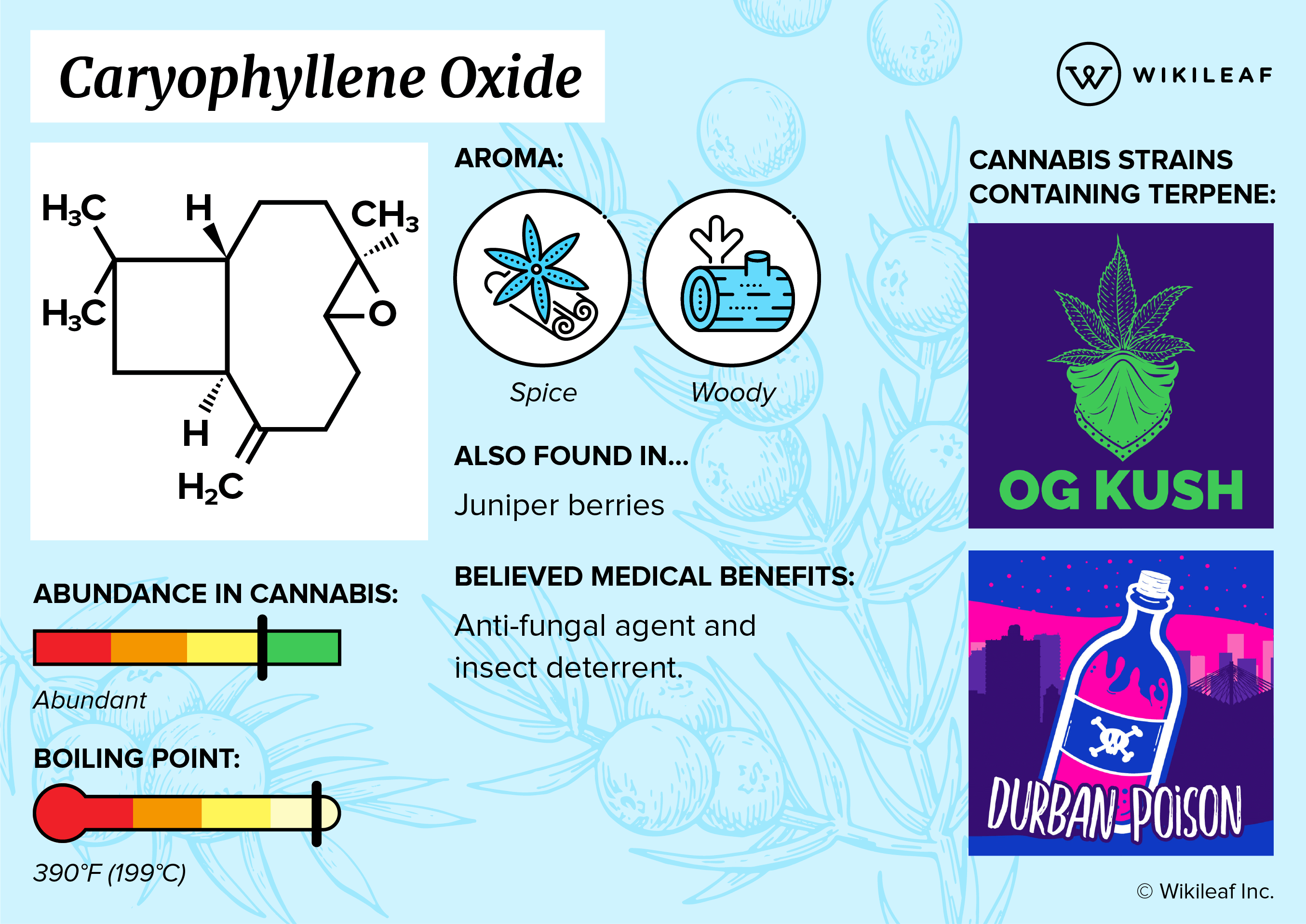 What are Terpenes? How They Affect Your High - Wikileaf