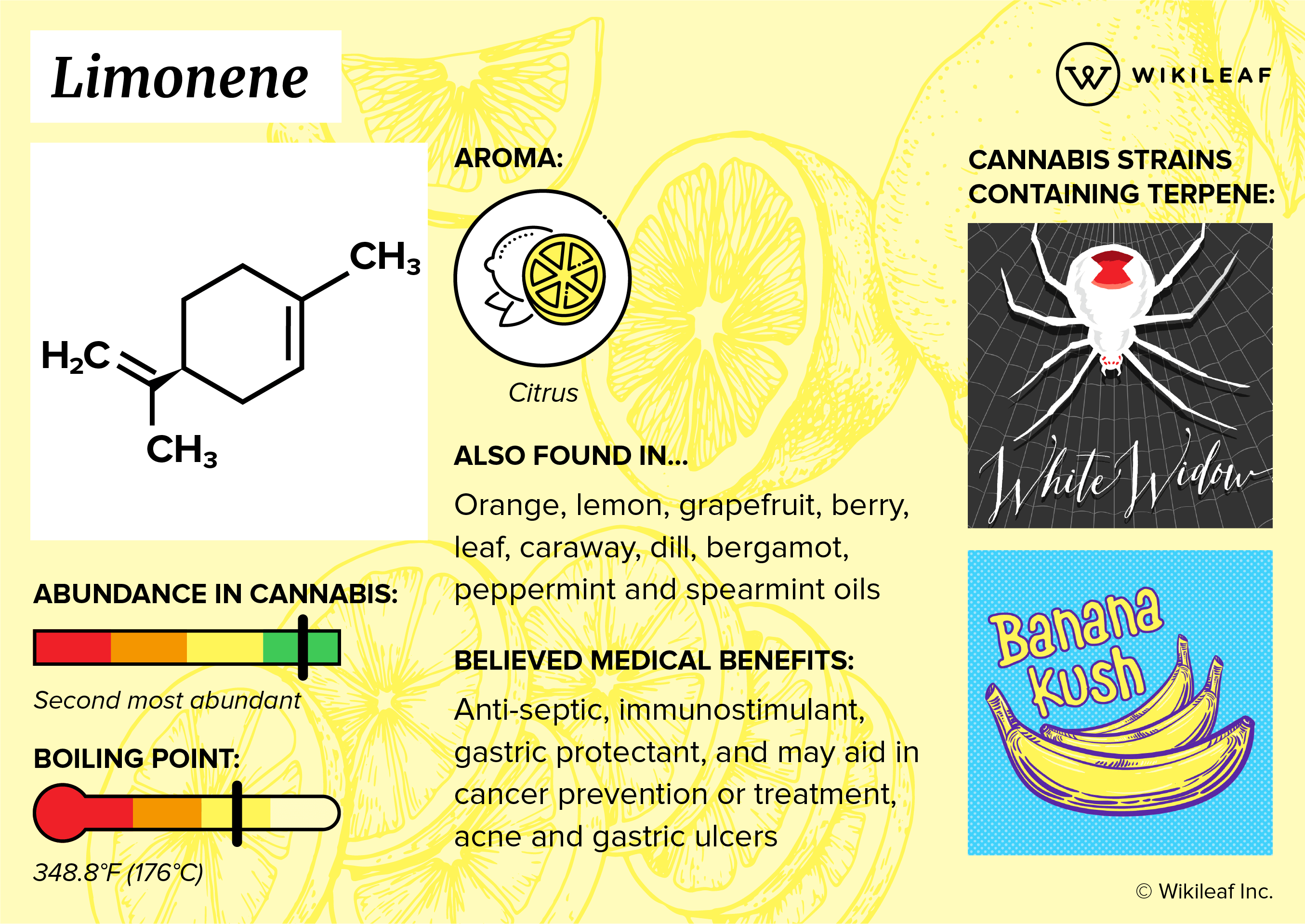A limonene terpene infographic that explains its benefits, aroma, and cannabis strains high in limonene