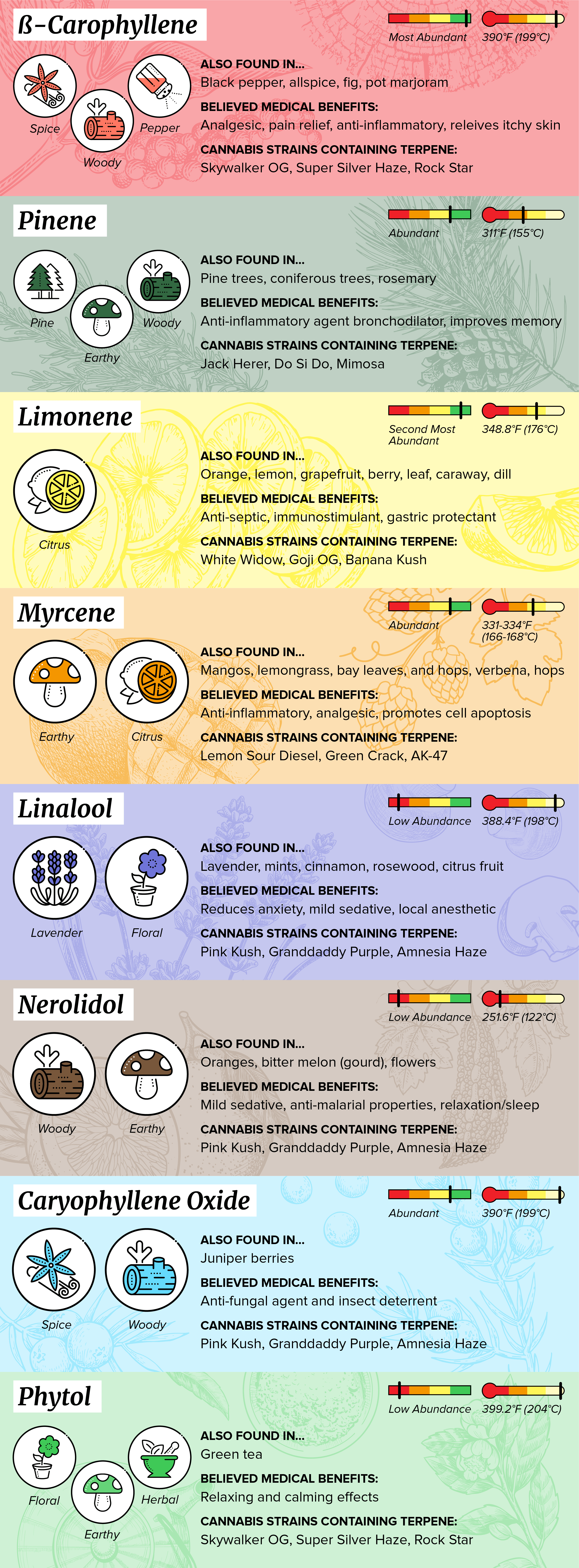 Terpene infographic chart overview