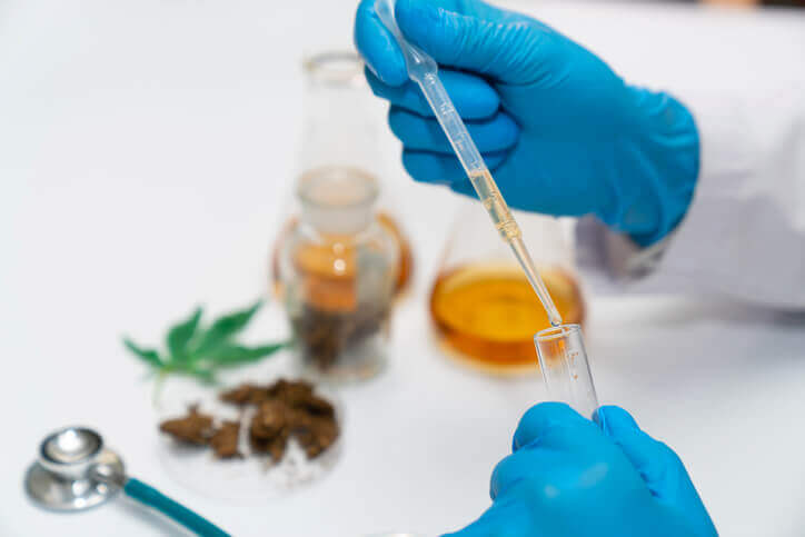Testing cannabis in the lab.