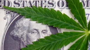 George Washington bill peeking through a marijuana leaf