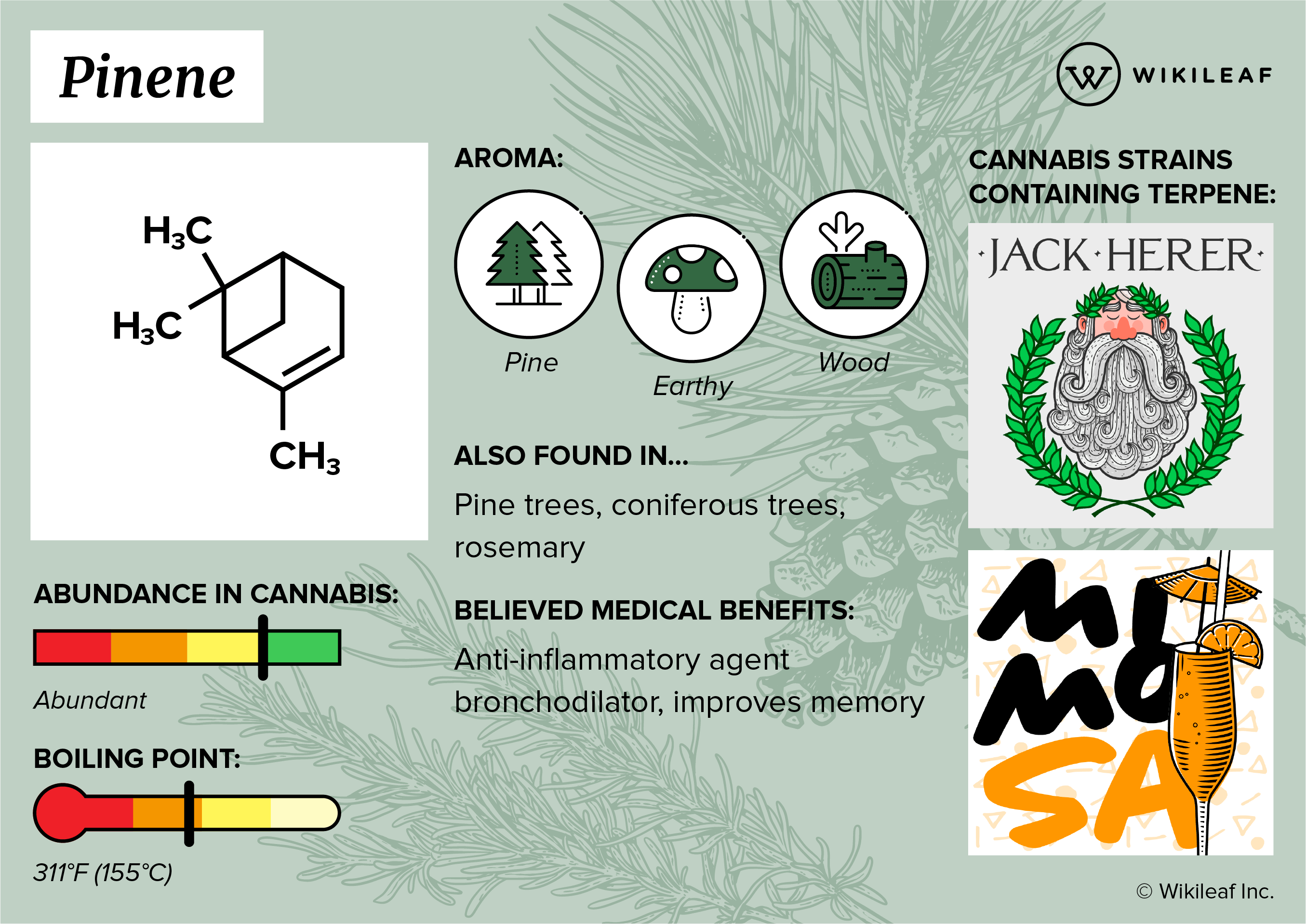 Pinene terpene infographic.