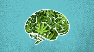 vector popart image of brain with marijuana in it