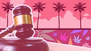 gabble laws in palm trees