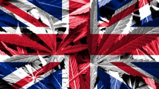 UK flag with cannabis on it