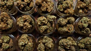 jars of dried cannabis