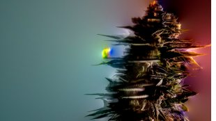 A cannabis plant with trippy stoner effects