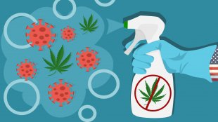 Illustration of corona virus and cannabis being disinfected by Uncle Sam