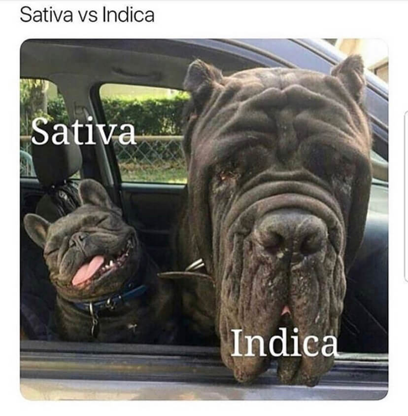 Two dogs representing Sativa and Indica faces